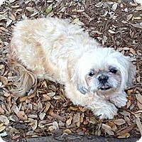 Adopt A Pet :: Peaches - Davie, FL