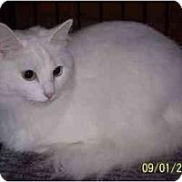 Adopt A Pet :: Flurry - Riverside, RI