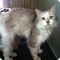 Adopt A Pet :: Rockette - Grand Rapids, MI