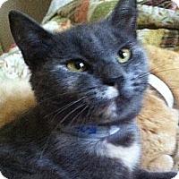 Adopt A Pet :: Sochi - Harrisburg, NC