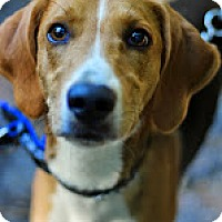 Adopt A Pet :: Orson - Tinton Falls, NJ