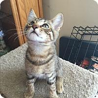 Adopt A Pet :: Lane - Kelso/Longview, WA