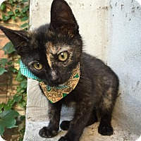 Adopt A Pet :: Millicent - Brooklyn, NY