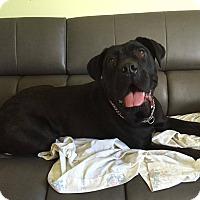 Adopt A Pet :: Val - Caledon, ON