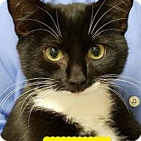 Adopt A Pet :: Topper - Albemarle, NC