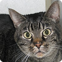 Adopt A Pet :: Tiger Lilly - Ruidoso, NM