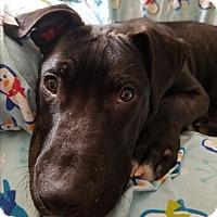 Adopt A Pet :: Riddick - Garden City, MI