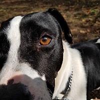 Adopt A Pet :: Hope - Zephyrhills, FL