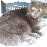 Adopt A Pet :: Puddin' - Davis, CA
