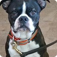Adopt A Pet :: Juggle - Baltimore, MD