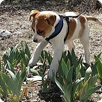 Adopt A Pet :: LEXI - Pena Blanca, NM