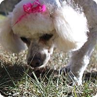 Adopt A Pet :: Blinky - Weeki Wachee, FL