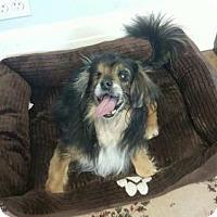 Adopt A Pet :: Mary Grace - Armonk, NY