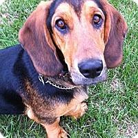 Adopt A Pet :: Humphrey - Indianapolis, IN