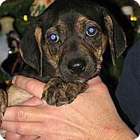 Adopt A Pet :: Christian - Albany, NY