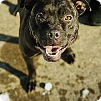 Adopt A Pet :: Denali - WARREN, OH