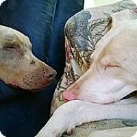 Adopt A Pet :: Gracie - Allegan, MI