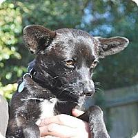 Adopt A Pet :: Kiwi - San Francisco, CA