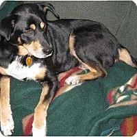 Adopt A Pet :: Gracie Paws - Newport, VT