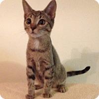 Adopt A Pet :: Nemo - Santa Rosa, CA