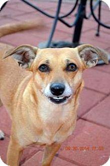 Dachshund Mix Dog for adoption in Lodi, California - Margie