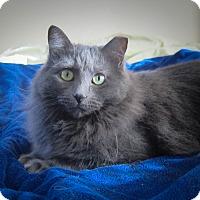 Adopt A Pet :: Greta & Hans - Roseville, MN