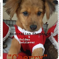 Adopt A Pet :: Cherry - El Cajon, CA