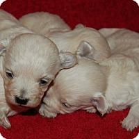 Adopt A Pet :: Baby Boy 2 - Aqua Dulce, CA