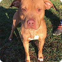Adopt A Pet :: Cody - Fayetteville, WV