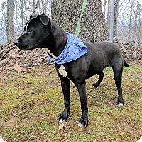 Adopt A Pet :: Dunk - Sylva, NC