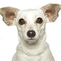 Adopt A Pet :: Blanca - oakland park, FL