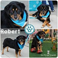 Adopt A Pet :: Robert - Kimberton, PA