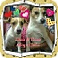 Adopt A Pet :: Enzo and Dino - Chicago, IL