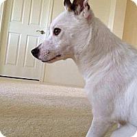 Adopt A Pet :: Lily - Honolulu, HI