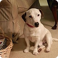 Adopt A Pet :: Norman - hartford, CT