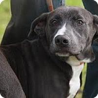 Adopt A Pet :: Sage ($200 adoption fee) - Staunton, VA