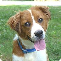 Adopt A Pet :: Kit - Mocksville, NC