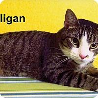 Adopt A Pet :: Gilligan - Medway, MA