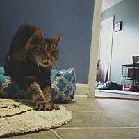 Adopt A Pet :: Mae West - Memphis, TN
