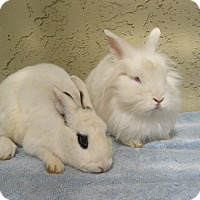 Adopt A Pet :: Jared & Janie - Bonita, CA