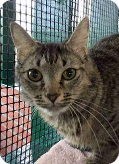 Domestic Mediumhair Cat for adoption in Porter, Texas - Heidi