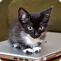 Adopt A Pet :: Tesla - Davis, CA
