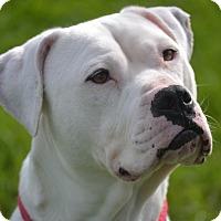 Adopt A Pet :: Freddie - Lake Odessa, MI