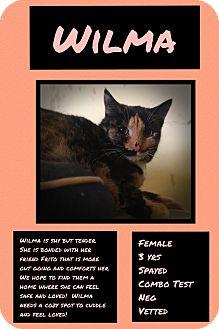 Calico Cat for adoption in CLEVELAND, Ohio - Wilma