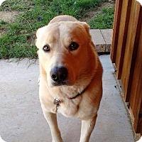Adopt A Pet :: Casey - Sinking Spring, PA