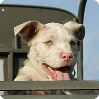 Adopt A Pet :: Howitzer - Dayton, OH