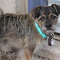 Adopt A Pet :: Sebastian - Phoenix, AZ
