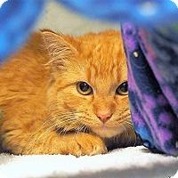 Adopt A Pet :: Spice $20 - Lincolnton, NC