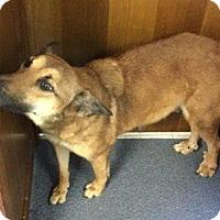 Adopt A Pet :: Cindy - Mt. Vernon, TX