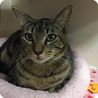 Adopt A Pet :: Mr.Magoo - Pasadena, CA